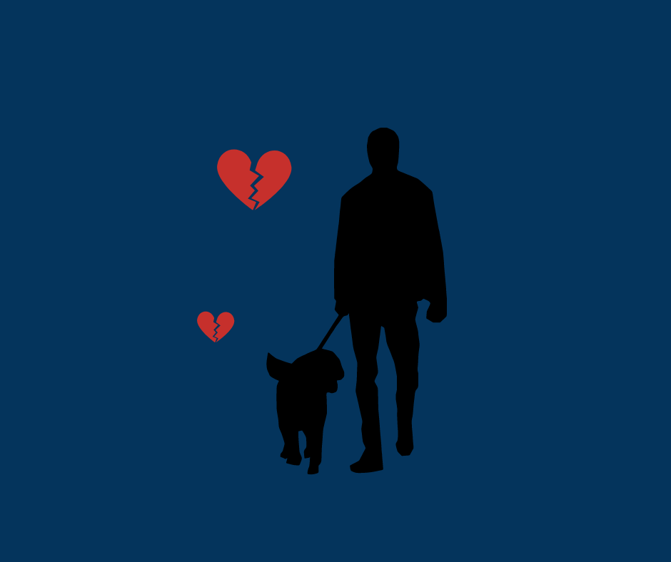 rozwód a pies